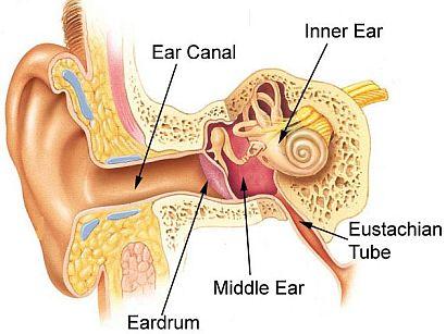 Ear Sinus Diagram Block And Schematic Diagrams