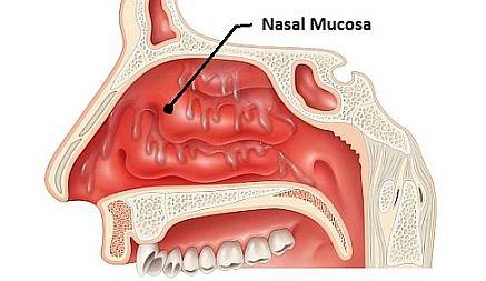 nasal-mucosa